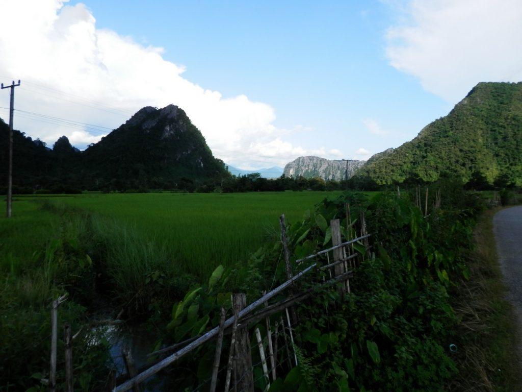 Rice Paddies at Vang Vieng